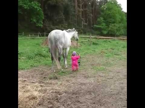 Little Girl Trying To Get Her Horse