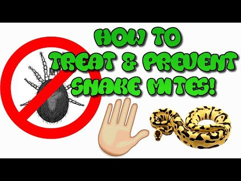 How To Treat & Prevent Snake Mites!