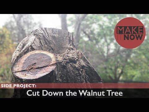 Side Project: Cut Down the Walnut Tree
