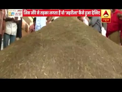 Viral Rakshak: Artificial Cumin Which You Are Consuming Can Cause Cancer | ABP News