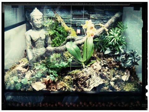 Setting up a vivarium for a Pygmy Chameleon