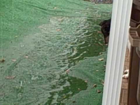 Rain Rain Go Away - Curly tries to eat the rain drops.