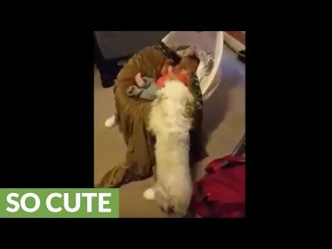 Dog gently rocks baby for comfort
