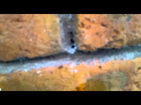 Owl Pest Control - Ants Nest in Building Outer Wall