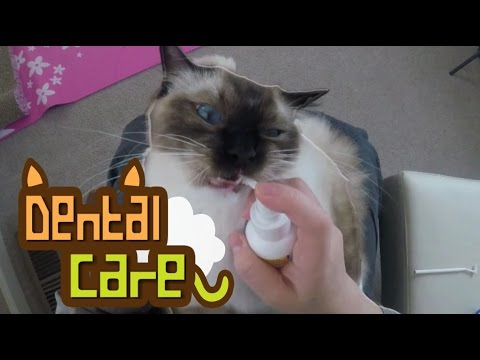 Watch : Dental Care For A Cat (Zymox)