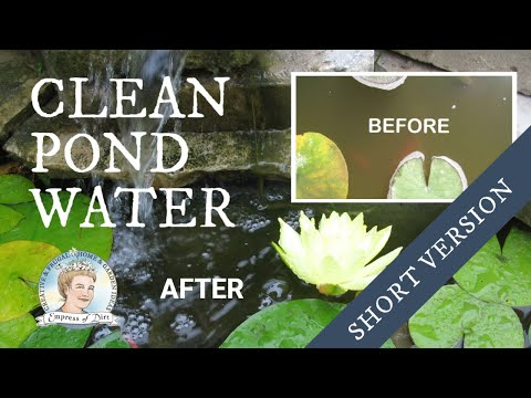 How to Clean Murky Pond Water without Chemicals | Short Version