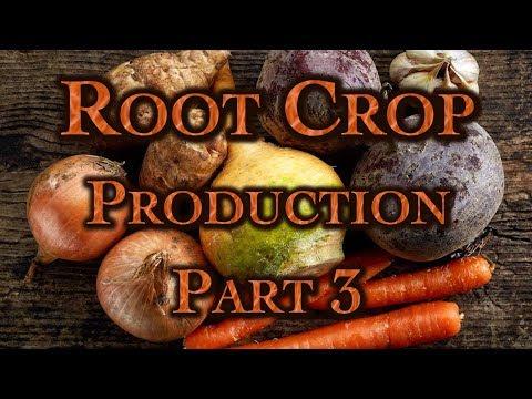 Root Crop Production Part 3