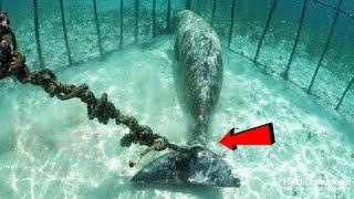 समुन्द्र की गहराई में गोताखोरों को मिली 7 रहस्यमई चीजें    Strangest Things Found In Ocean (Part-2)