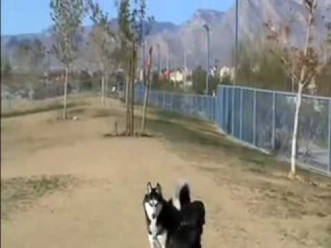 Dog Park Training - Fixing dog park problems before they escalate.
