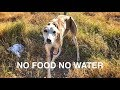 Download She was abandoned with no food or water ... AMAZING HAPPY END! In Mp4 3Gp Full HD Video