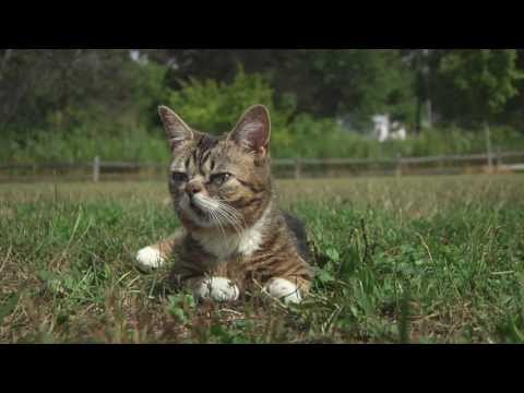 Lil BUB Goes to the Park