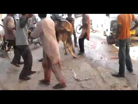 Xxx Mp4 Salman S Cow 2014 2 3gp Sex