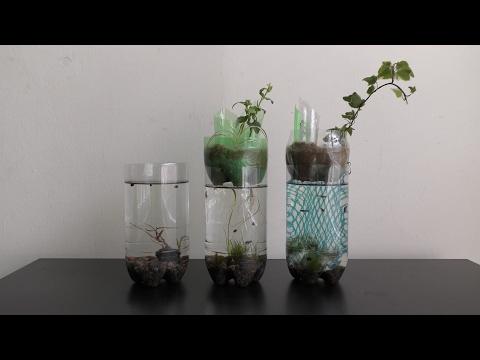 Plastic Bottle Aquarium for beginners