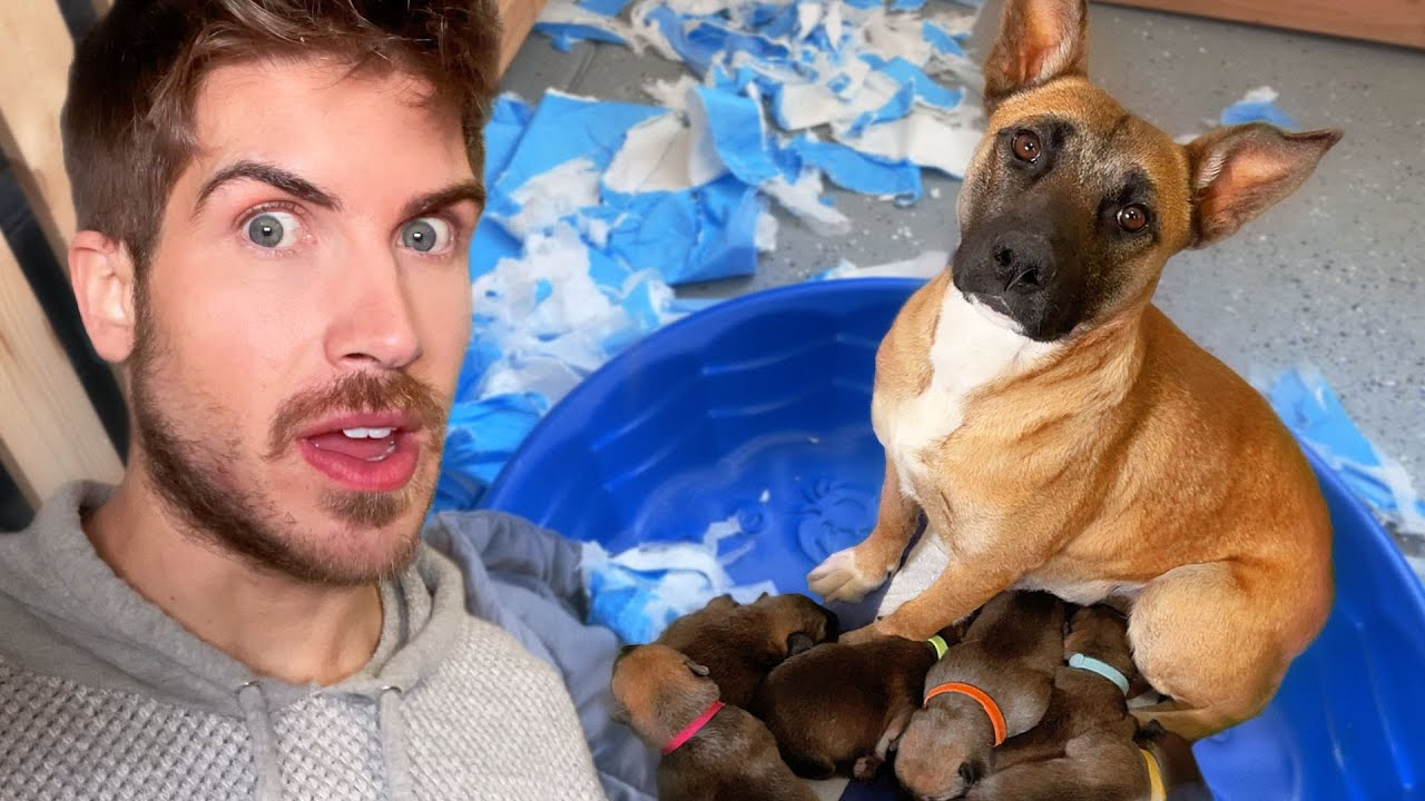 My Foster Dog Hid Her Puppies From Me *FREAK OUT*