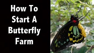 How To Start A Butterfly Farm Or Butterfly Business