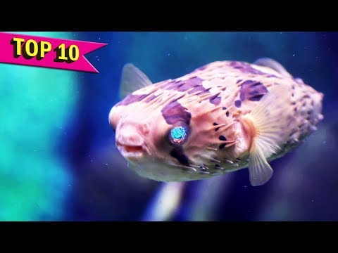 Top 10 Most Deadliest Fish in the World