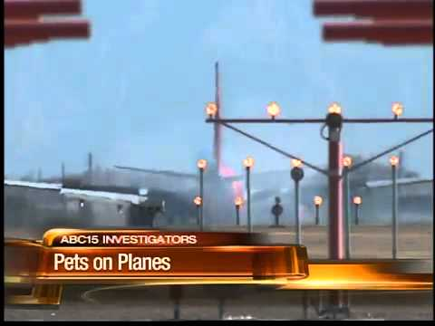 Is your pet in danger during air travel?