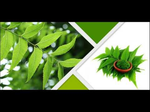 Neem Oil  Helps To Treat Dandruff And Itching How To Use At Home