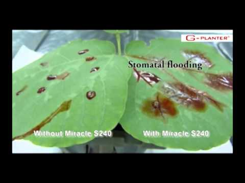 Miracle - Unleash The Power of your Pesticide
