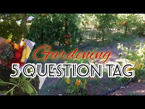 5 Question TAG