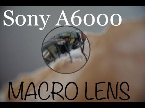 SONY A6000 MACRO LENS!!! CHEAP BUT HIGH CLASS LENS!!!