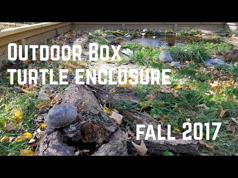 New Outdoor Box Turtle Enclosure- Fall 2017
