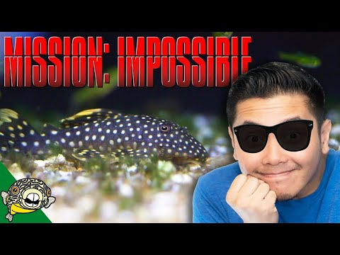 Is it Dead? Mission Impossible missing boxes unboxing!