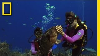 How to Care for the Ocean | National Geographic
