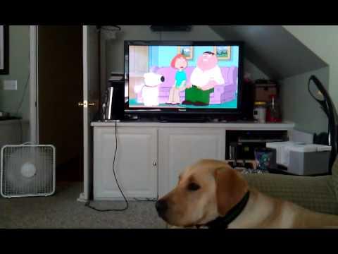Dog barks at TV doorbell