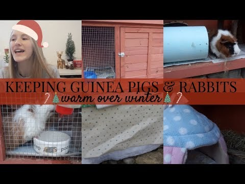 TIPS ON KEEPING GUINEA PIGS & RABBITS WARM DURING WINTER | Imy'sAnimals