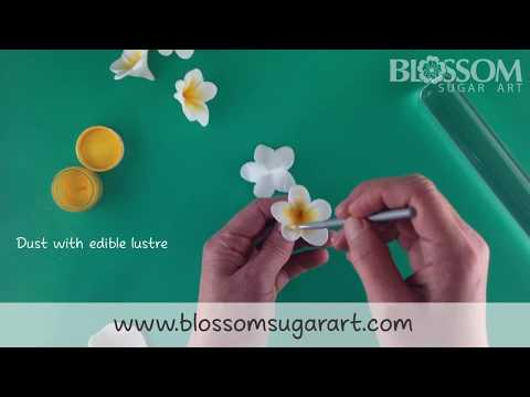 Making a frangipani / plumeria flower - Quick and Easy