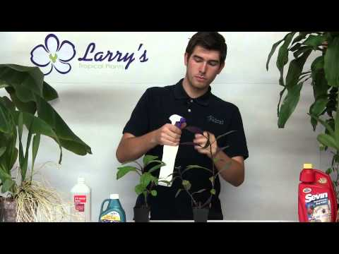 How To Control and Remove Aphids and Mites Simply