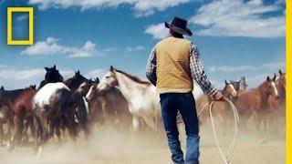 Wrangling Wild Horses in the Mountains of Montana | Short Film Showcase