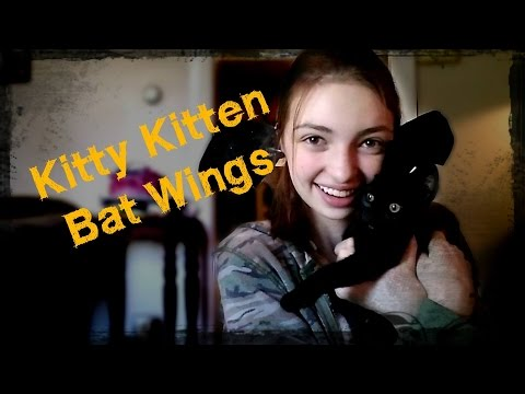 Kitty Kitten Bat Wings!