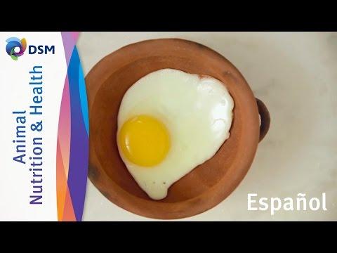 Los huevos son parte de su alimentación saludable todos los días