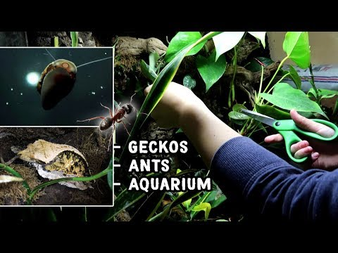 These Tanks Needed Some Serious TLC - Geckos, Ants & Aquarium!
