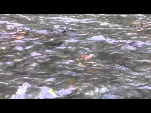 The Journey Upstream