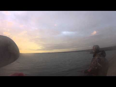 Action Camera - Canada goose call in action