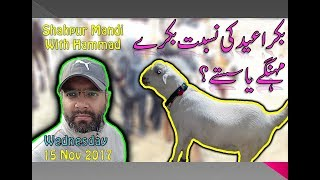 bakra-bakra Pakfiles Search Results (Browse Pakistani Community