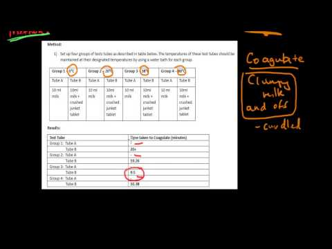 Maintaining a Balance - Dot point 1.3 (Part 1) - Effect of temperature on enzyme activity