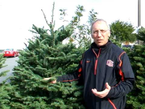 Recycling Your Christmas Tree