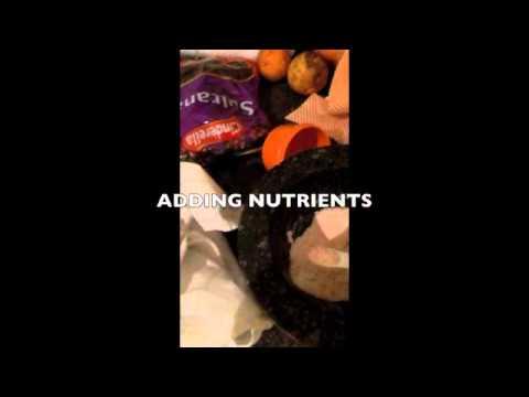 Preparing Water Kefir to make Soda (VIDEO) Buy Water Kefir Grain NZ.