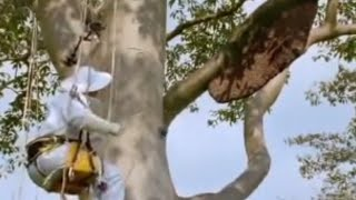 Giant honey bees - Life in the Undergrowth - BBC Attenborough