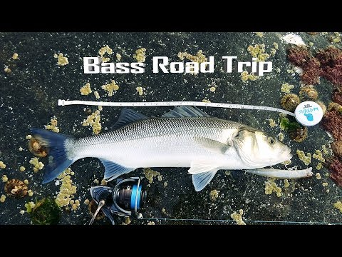 Lure Fishing Road Trip- New Mark- Bass, Wrasse & Pollack