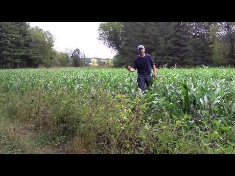 sorghum food plots