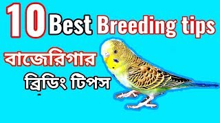 10 minutes) Bodri Bird Breeding Tips Video - PlayKindle org
