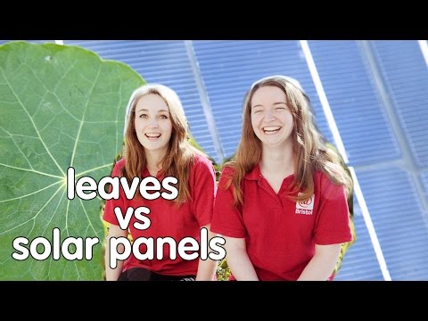 Plants vs Solar Panels: Which is better at capturing solar energy?   At-Bristol Science Centre