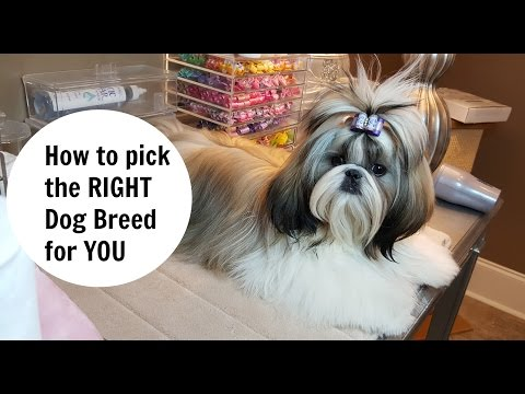 How to pick the right dog breed