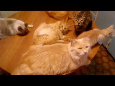Kitty Cats High on Catnip aka Cat Pot - Funny!