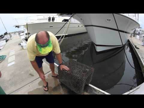 Offshore Fishing Tip - Pin Fish Traps with Live Bait  | Jacksonville Fishing Trips